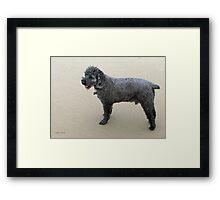 Miniature Poodle Framed Print