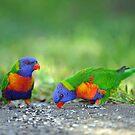 Rainbow Lorikeets. Cedar Creek, Australia. by Ralph de Zilva
