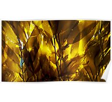 Kelp Forest Poster