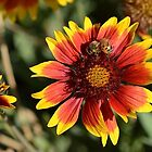 Honeybee on a Common Madia Flower by TheBluePlanet