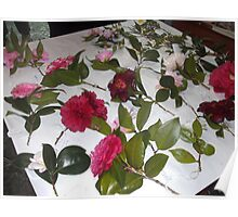Camellia selection Poster