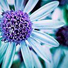 Floral Symphony in Purple by Vicki Field