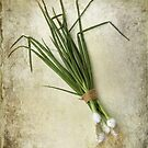 Spring Onions by Patricia Jacobs CPAGB LRPS BPE4