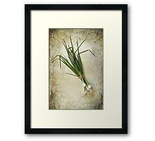 Spring Onions Framed Print