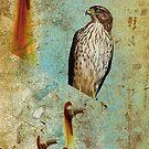 Beach Hawk by Deborah  Benoit