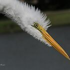 Egret Look by Deborah  Benoit