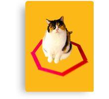 cat trap Canvas Print