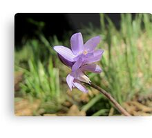 Tiny Blue Dick Wildflower Metal Print