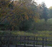 Bridge in the Woods over a Stream Sticker