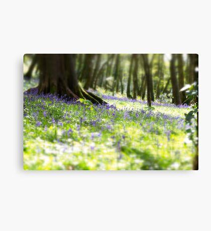 Courtmacsherry Bluebells Canvas Print