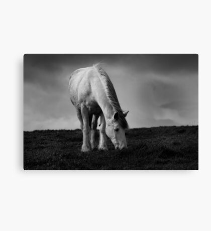 Pegasus Canvas Print