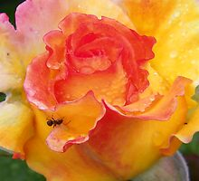 Ant on a Rose by LoneAngel