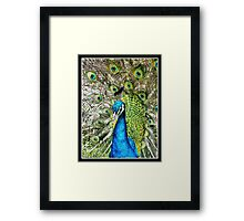 A Peacock went a Wooing Framed Print