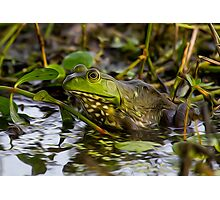 Female Bullfrog Oil Photographic Print