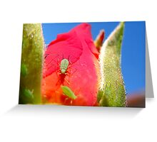 Aphids on a Rose Greeting Card