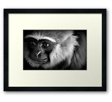 Animal Life Framed Print