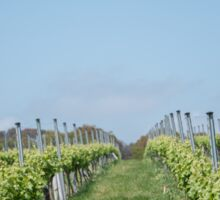 Vineyard rows Sticker