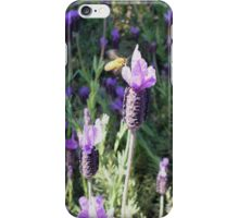Lavender Love iPhone Case/Skin