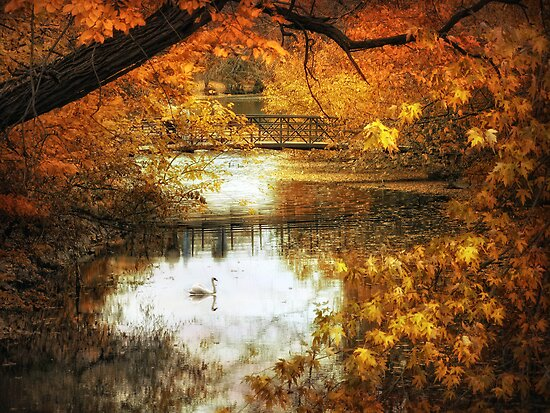Golden Pond by Jessica Jenney