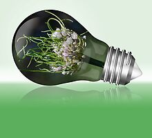 Leek flower inside a light bulb by ClickSnapShot