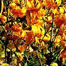 Orange Disorder by Fara
