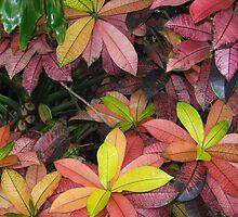 Multicolor Leaves by elizabethtarde