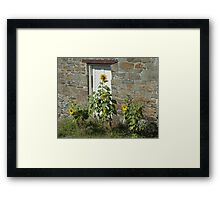 Sunflowers and the Old Stone Wall Framed Print