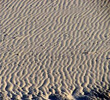 Ripples in the sand by Choux