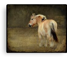 Rainy Day Pony~ Canvas Print