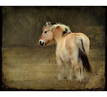 Rainy Day Pony~ Photographic Print