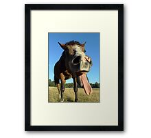 Hilarious Horse Ha-Ha Framed Print