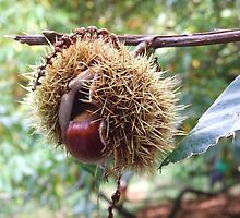 Chestnut by celiapoon