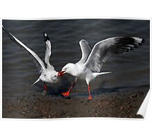 Duelling Seagulls Poster