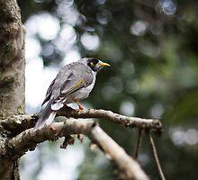 Miner Bird #2 - Newcastle by Daniel Rankmore