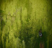 Lush by Thomayne