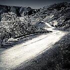 The path by Alex Vasilakos