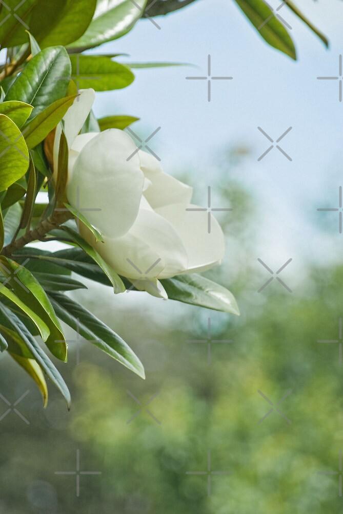 The Sweet Magnolia Tree by Catherine Hamilton-Veal  ©