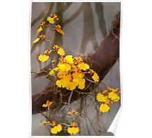 Orchid - Golden morning  Poster