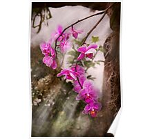 Orchid - Tropical Passion Poster