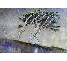 Cornish Trees Photographic Print