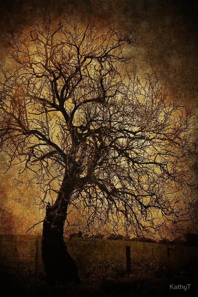 Winter Tree by KathyT