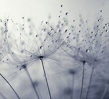 Dandelion Dust by Amy Dee