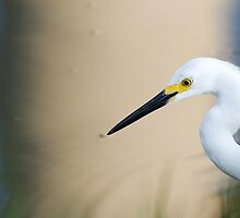 Snowy Egret, Surreal Background by Paul Wolf
