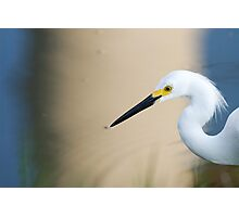 Snowy Egret, Surreal Background Photographic Print