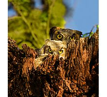 Mother and Baby Great Horned Owls Photographic Print