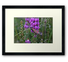 Spotted Moth Framed Print
