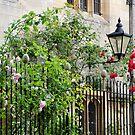 Roses & Lamp by vbk70