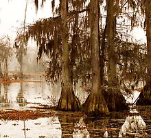 Misty Morning in the Swamp by Paul Wolf