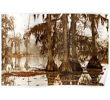 Misty Morning in the Swamp Poster