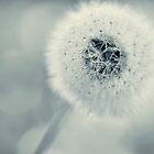 dandelion blues by Ingz